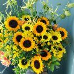 暑さに強い花の選び方